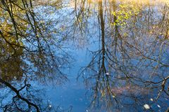 Reflex of trees on the water surface. Autumn stock image