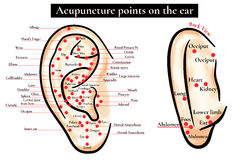 Reflex zones on the ear. Acupuncture points on the ear. Map of a Royalty Free Stock Photos