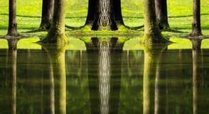 Reflexões das árvores na floresta inundada Imagem de Stock