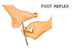 Reflexes of the foot. neuroscience. Vector illustration of reflexes of the foot Royalty Free Stock Photo