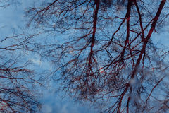 Reflexión abstracta de los árboles en superficie del agua Imagen de archivo