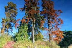 Reflexión abstracta de los árboles en superficie ondulada del agua foto de archivo libre de regalías