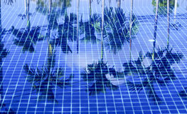 Reflexión abstracta del árbol de coco imagen de archivo libre de regalías