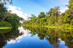 Reflexión amazónica Imágenes de archivo libres de regalías