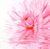 Reflexión atractiva de la flor en agua