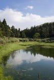 Reflexión azul en el río en el bosque del verano Fotos de archivo libres de regalías