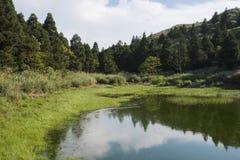 Reflexión azul en el río en el bosque del verano Imagen de archivo libre de regalías