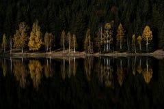 Reflexión coloreada del árbol en un lago de la montaña Foto de archivo