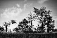 Reflexión de árboles Foto de archivo libre de regalías