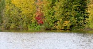 Reflexión de árboles en agua metrajes