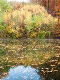 Reflexión de árboles en agua Fotos de archivo libres de regalías