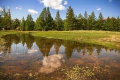 Reflexión de árboles en The Creek Imagen de archivo