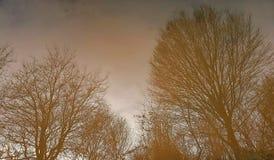 Reflexión de árboles en el agua Foto de archivo