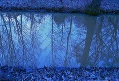 Reflexión de árboles en el agua Fotografía de archivo