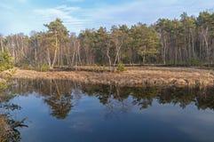 Reflexión de árboles en el agua de un pequeño lago del bosque del humedal Fotos de archivo