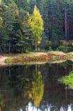 Reflexión de árboles en el agua del río Mologa Fotos de archivo libres de regalías