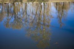 Reflexión de árboles en el lago Fotografía de archivo libre de regalías