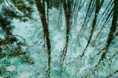 Reflexión de árboles en el lago Imágenes de archivo libres de regalías