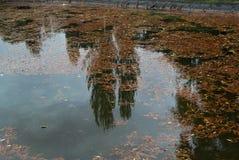 Reflexión de árboles en el lago, con las hojas caidas en él Fotos de archivo libres de regalías