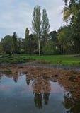 Reflexión de árboles en el lago, con las hojas caidas en él Foto de archivo libre de regalías