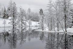 Reflexión de árboles en el lago con nieve Foto de archivo