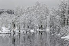 Reflexión de árboles en el lago con nieve Foto de archivo libre de regalías