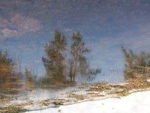 Reflexi?n de ?rboles en la nieve en el agua del derretimiento en la primavera foto de archivo libre de regalías