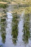 Reflexión de árboles en las aguas inmóviles de un lago Fotografía de archivo