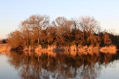 Reflexión de árboles en sol en la oscuridad Imágenes de archivo libres de regalías
