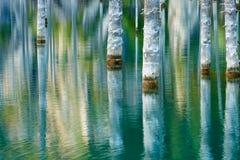Reflexión de árboles en un fondo verde del lago Imagen de archivo libre de regalías
