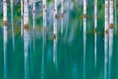 Reflexión de árboles en un fondo verde del lago Foto de archivo