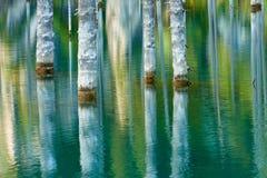 Reflexión de árboles en un fondo verde del lago Imagenes de archivo