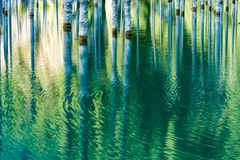 Reflexión de árboles en un fondo verde del lago Imagen de archivo