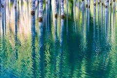 Reflexión de árboles en un fondo verde del lago Imágenes de archivo libres de regalías