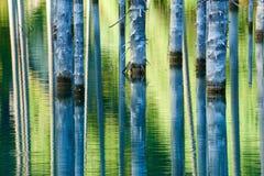 Reflexión de árboles en un fondo verde del lago Fotos de archivo
