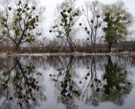 Reflexión de árboles en un río imagen de archivo