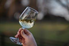 Reflexión de la copa de vino Imagenes de archivo
