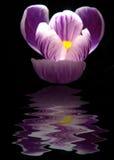 Reflexión de la flor Imagen de archivo libre de regalías