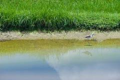 Reflexión de la hierba Fotografía de archivo libre de regalías