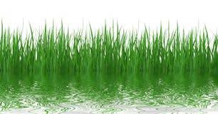 Reflexión de la hierba en agua imagen de archivo libre de regalías