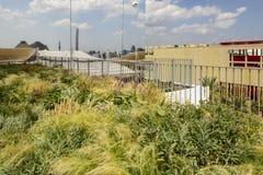 Reflexión de la hierba salvaje en el pabellón checo, EXPO Milán 2015 Foto de archivo libre de regalías