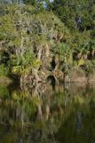Reflexión de la línea de la playa en Kathryn Abbey Hanna Park, el condado de Duval, Jacksonville, la Florida imágenes de archivo libres de regalías