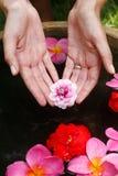 Reflexión de la mano de la flor Foto de archivo libre de regalías