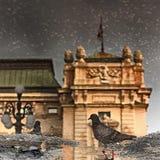 Reflexión de la paloma y del agua Imágenes de archivo libres de regalías