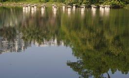 Reflexión de la planta en el agua Fotos de archivo libres de regalías