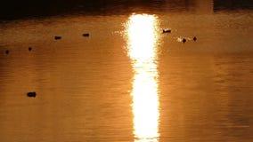 Reflexión de la puesta del sol en el lago metrajes