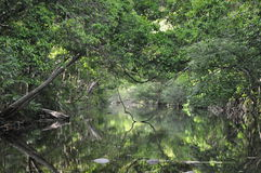 Reflexión de la selva tropical, Australia Foto de archivo libre de regalías