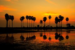 Reflexión de la sombra de la palmera fotografía de archivo libre de regalías