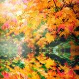 Reflexión de las hojas de otoño Fotos de archivo libres de regalías