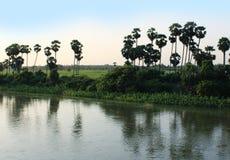 Reflexión de las palmeras Foto de archivo libre de regalías